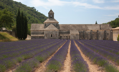Senanque Abbey with Lavender