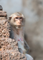 old monkey looking for her son