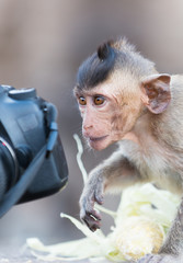 cute child monkey looking camera