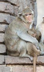 Mother monkey hug her son