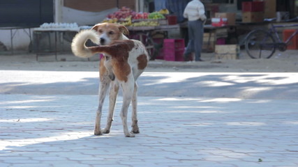 The dog on the street of Indian town