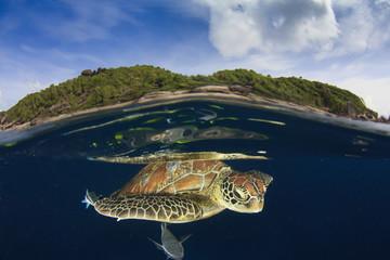 Green Sea Turtle and tropical paradise island