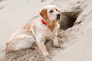 Puppy dug a hole in the sand