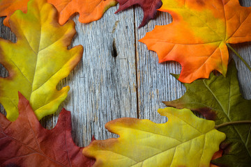 Fall Leaves on a Rustic Wood Background in the Shape of a Frame