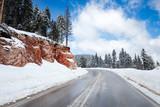 Fototapety road in winter