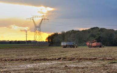scène rurale