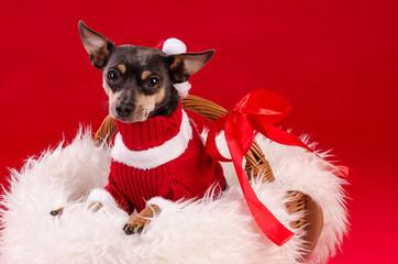 Cute Christmas puppy dog