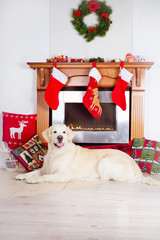golden retriever dog at a fireplace decorated for christmas