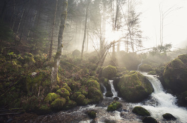 small stream in black forest, Germany