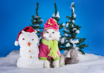 young kitten makes a snowman in a forest