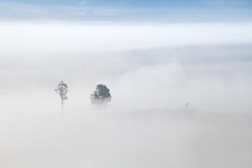 Morning mist at Khao-kho Phetchabun,Thailand