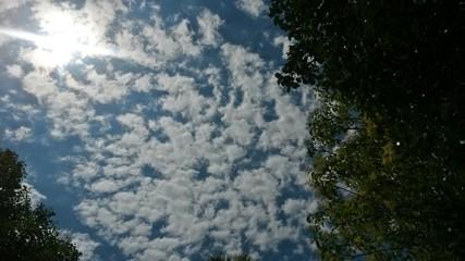 Arboleda y cielo azul nuboso