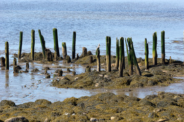 Remains of the old pier at Stockton Springs Maine
