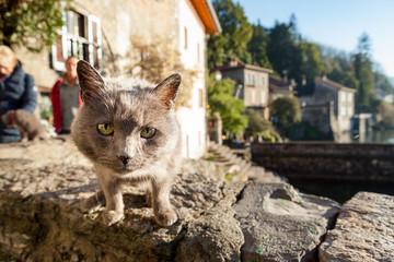 Gatto, Lago di como