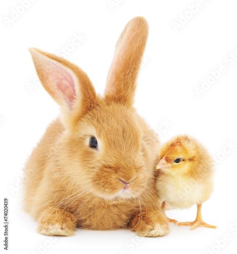Rabbit and chicken