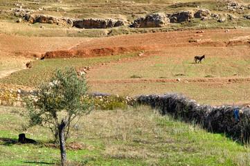 Paesaggio berbero