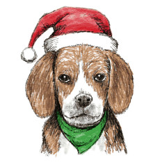 beagle with christmas hat