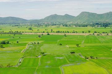 landscape in the cornfield