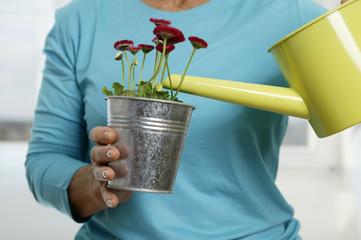 Seniorin, die Blumen gießen, close-up