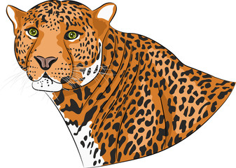 Vector head of a jaguar.