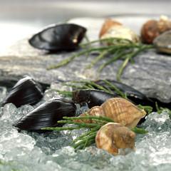 Muscheln auf zerstoßenem Eis, close-up