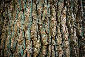 Brown oak bark