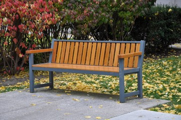 Bench in garden with leaves on the ground