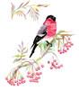 Bullfinch on a branch. Watercolor.