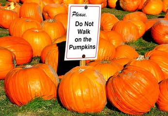 Do not walk on pumpkins sign
