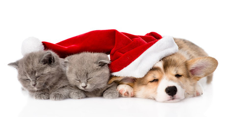sleeping Pembroke Welsh Corgi puppy dog with santa hat and two k
