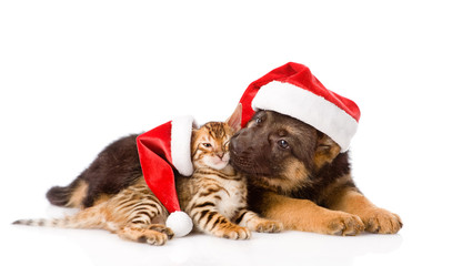 german shepherd puppy and bengal kitten sitting in profile. isol