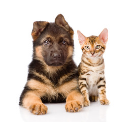 little bengal cat and german shepherd puppy dog lying together.