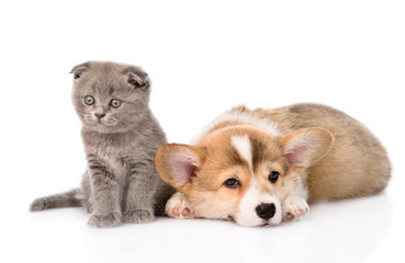 sad cat and dog together. isolated on white background