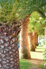 Palm trees and a path on sunny day