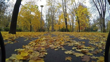 Ride in autumn city park viewed from stroller bumper 4K