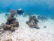 scubadivers undersea, Cuba