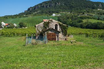 The old vineyard at lake Balaton north coast