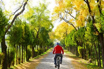 bisiklet kültürü