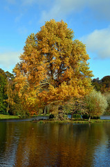Majestic Oak tree on island.