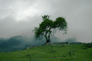 Árvore na neblina