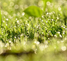 Small raindrops on the grass