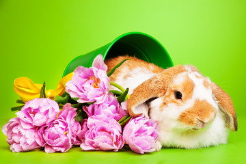 Cute rabbit with flowers on green background