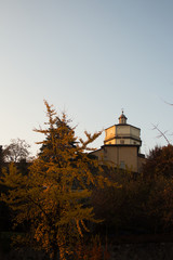 chiesa albero