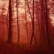Red colored forest