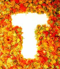 Letter T.