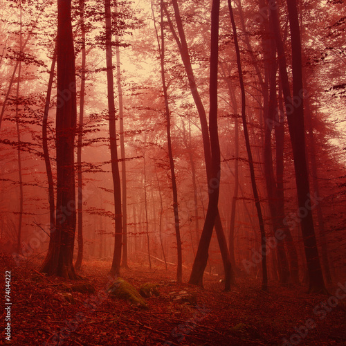 Fototapeta Red colored forest