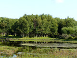 Waldgebiet Het Woud Niederlande