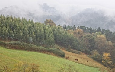 Horses at Basque Country
