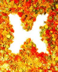 Letter X.