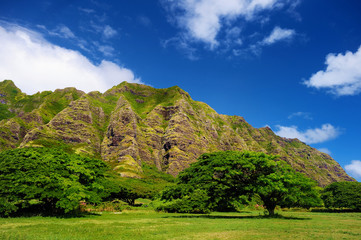 Cliffs and trees of Kualoa Ranch, Oahu